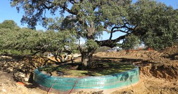 In the next few weeks, the city will move the heritage oak tree to its new location at the southeast corner of the municipal site. The tree was an obstacle in the building plans of the new municipal building and the Buda City Council voted to move the tree instead of cutting it down. The moving of the tree is expected to take several days. (photo courtesy of City of Buda)