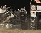 Maybe this is not your first rodeo, but it was Buda's